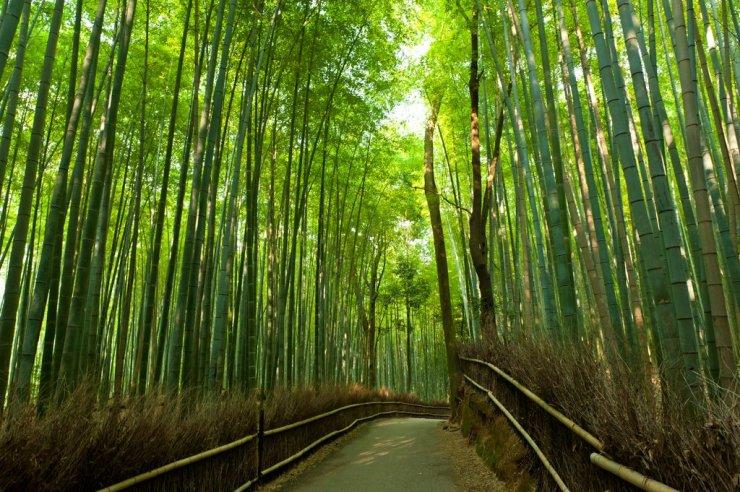 Arashiyama-Bamboo-rung-truc-arashiyama
