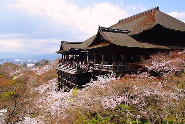 Chua-Thanh-Thuy-Sakura