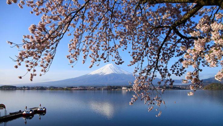Ho-Kawaguchi-sakura