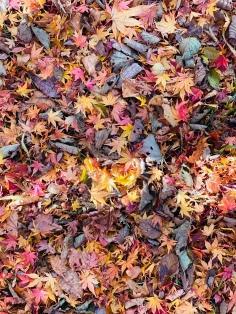 Nikko-chuzenjilake -mua thu -autumn-du-lich-nhat-ban-tu-tuc
