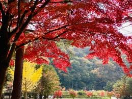 Kawaguchiko-mua thu -autumn-du-lich-nhat-ban-tu-tuc
